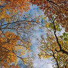 colorful foliage on a sky background by mike-pellinni