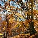 autumn spirits in the woods by mike-pellinni