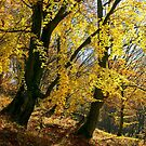 golden foliage in the forest by mike-pellinni