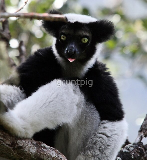 the raspberry of the Indri by gruntpig