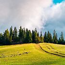 country road in mountains by mike-pellinni