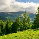 spruce trees on the grassy slope by mike-pellinni