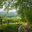 dirt road down the hill in to the rural valley by mike-pellinni
