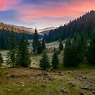 spruce forest in foggy valley at reddish sunrise by mike-pellinni