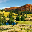 pond on a grassy meadow among spruce trees by mike-pellinni