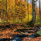 brook in autumn forest by mike-pellinni