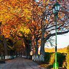 green city light on autumn embankment by mike-pellinni