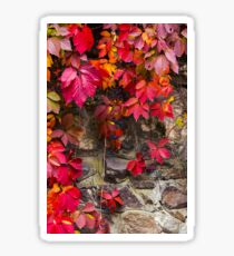colorful texture of ivy plant on the stone wall Sticker