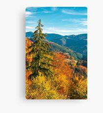 beautiful autumn background Canvas Print
