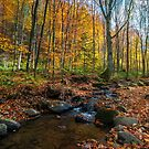 brook among stones and foliage in forest by mike-pellinni