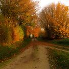 The Lane in Autumn by Pamela Jayne Smith