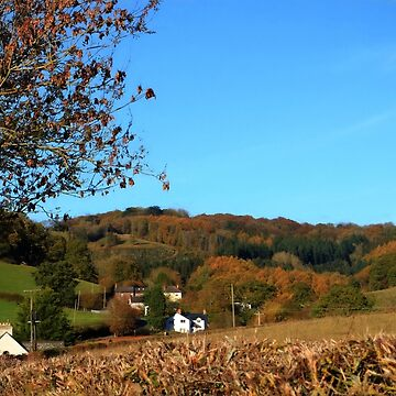 View of The Buckholt from over the hedge by missmoneypenny
