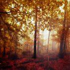 Rain Whispers - Fall forest in Mist and Rain by Dirk Wuestenhagen