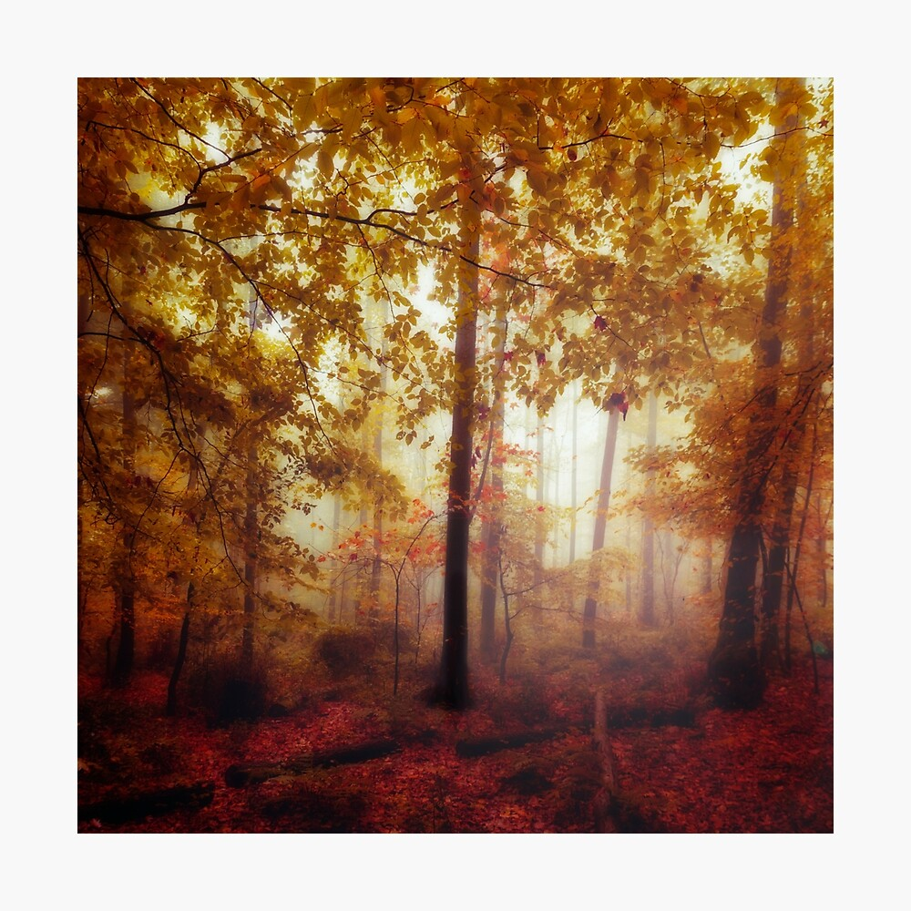 Rain Whispers - Fall forest in Mist and Rain Photographic Print