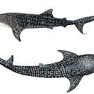 «Los tiburones ballena Rhincodon typus» de Chloé Yzoard