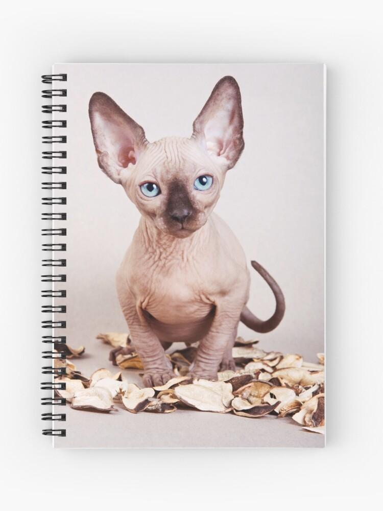 Sphynx kitten with blue eyes, no hair   Spiral Notebook
