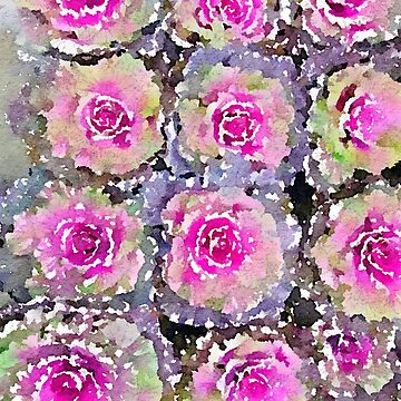 Pink and Green Kale Flower Leaves by juniperdesign