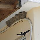 Swallow's nests by EHAM-spotter