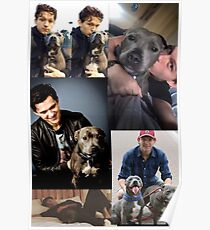 Tom Holland & Dogs Poster