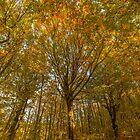 Pillar of Autumn by Giorgos Karampotakis