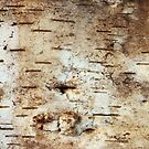 Birch bark by siloto