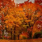 New England fall - Brookline, Massachusetts  by LudaNayvelt