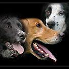 Three Friends by Chris Clark