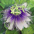 Passion Fruit Blossom by joeyartist