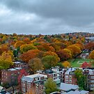 Brookline fall panorama by LudaNayvelt