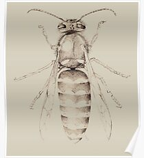 Yellowjacket in pencil Poster