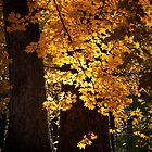 Maple Deluge by Adam Bykowski