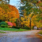 Autumn road in Brookline, MA by LudaNayvelt