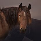Roan Stallion by Kristi Johnson