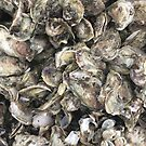 Oysters Shells Seashells by BeachBumFamily