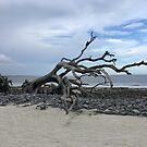 Jekyll Island Boneyard Beach by BeachBumFamily