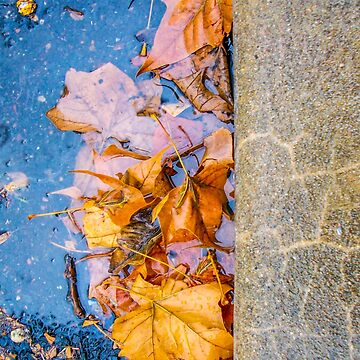 Leaves in Gutter by dm-photography