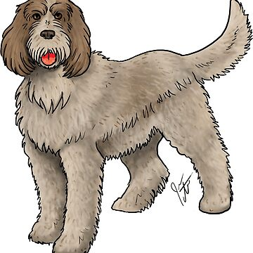 Spinone Italiano by jameson9101322