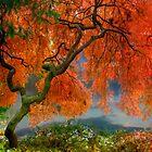 Japanese maple tree by LudaNayvelt