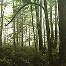 One Forest Day  by artcascadia