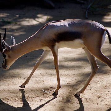 A Antilope Gazelle by loiteke