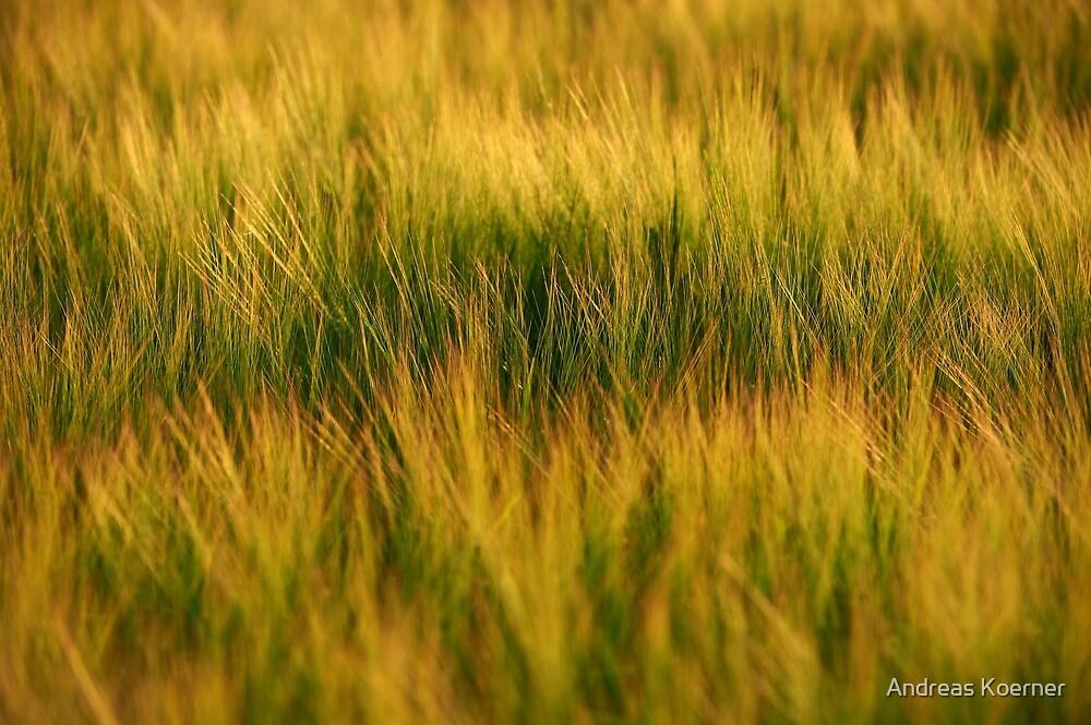 """Barley"" by Andreas Koerner"