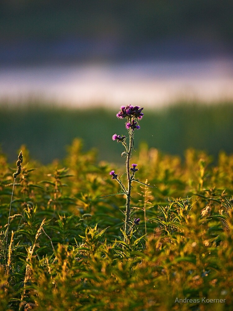 """""""Thistle"""" by AndreasKoerner"""