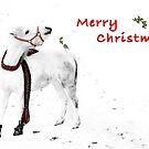 Shetland pony in snow wishing merry Christmas by Dan Shalloe