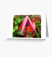 Classic Fuchsia magellanica Greeting Card