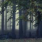 Fog On The Chase by Ann Garrett