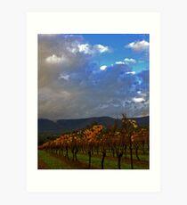 Yarra Valley Vineyard Art Print