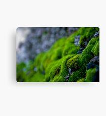 Mossy Micro Scape Canvas Print