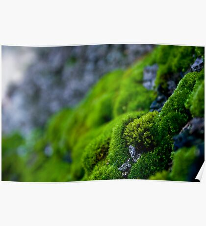 Mossy Micro Scape Poster
