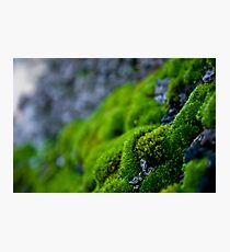 Mossy Micro Scape Photographic Print