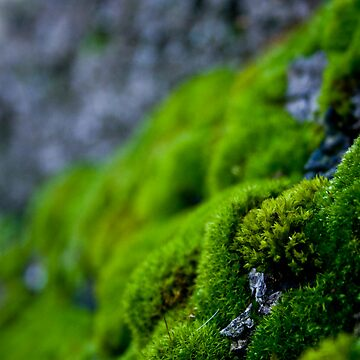 Mossy Micro Scape by SteveWilliams